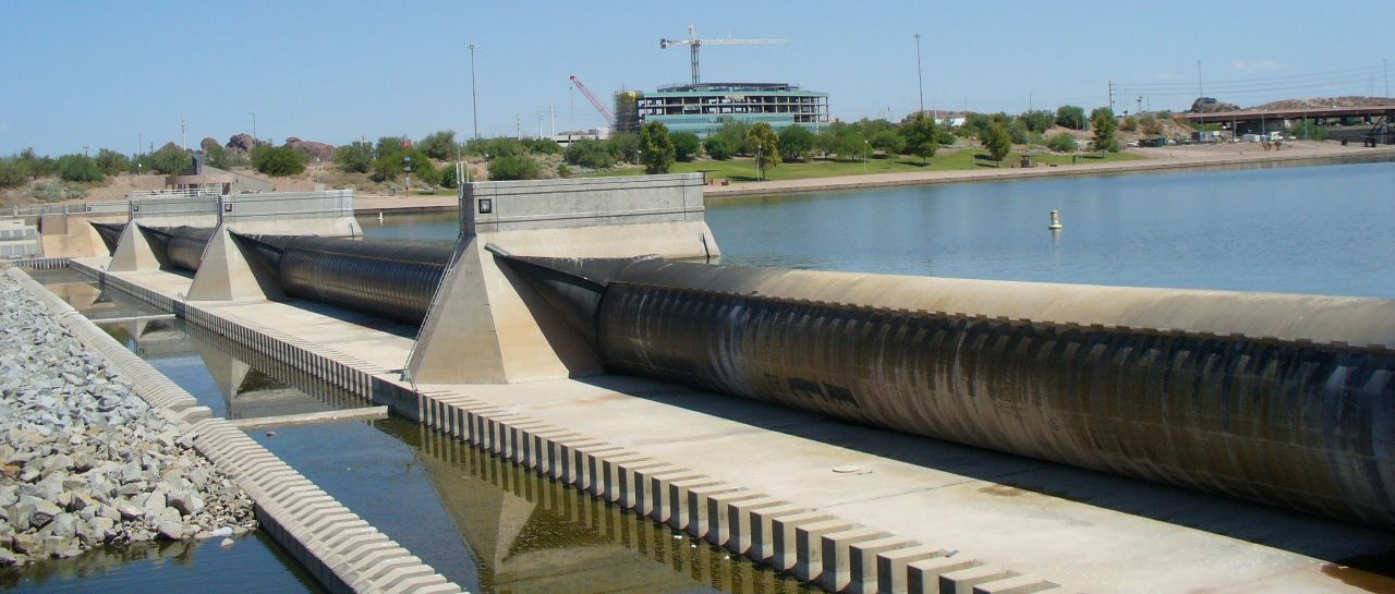 A mosquito breeding ground at the Tempe Cesspool for the Arts